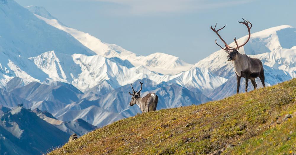 Alaskan Heritage & Wildlife | Flying Jayhawks
